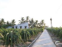 Bán nhanh giá rẻ 3,628m2 đất thổ cư, thuận tiện làm biệt thự vườn, nhà xưởng, trồng thanh long