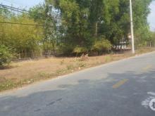 Bán đất gần trường THCS . đất trồng cây lâu năm đường cây trôm mỹ khánh.