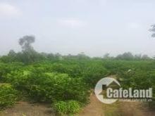 Chính chủ cần bán gấp 2000m2 đất ruộng huyện Bình Chánh giá 1,45 tỷ Liên Hệ : 0773067306