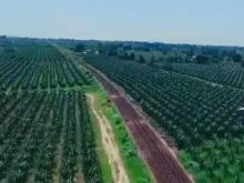 Bán 11,336m2 đất nông nghiệp hồng thái mặt tiền liên xã chỉ 150k/m2 cách biển 6km Lh 0938677909 Hiền