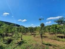 Nhà đất Đà Lạt: Cần bán lô đất ở huyện Lâm Hà giá phải chăng