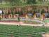 5050m2 đất trang trại khu nghỉ dưỡng Lâm Đồng chỉ 370 triệu. Liên hệ: 0906 908 602
